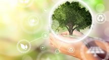 A woman's hands holding a miniature tree. Environmental biodiversity in ecosystem concept. Backdrop as a concept of energy efficiency. The power of green energy. Concept of renewable energies