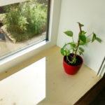 Photographie d'une plante verte, posée sur un appui de fenêtre. Chantier d'une rénovation de logements collectifs sociaux